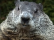 PETA Sets Sights on Punxsutawney Phil
